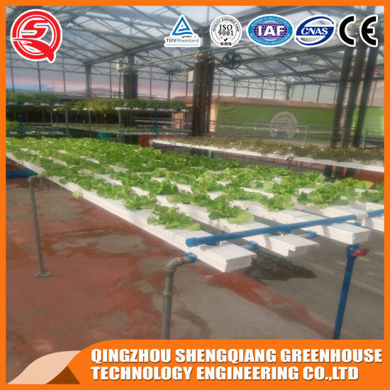 Multi-Span Agriculture Productive Vegetables/Garden/Flowers/Farm Plastic Film Greenhouse with Hydroponics System