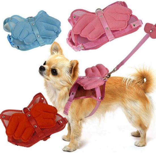 OEM Pet Clothes with Angel Wings and Leash for Dog pictures & photos