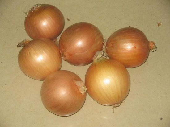 Class One Fresh Yellow Onion with Yellow Colour