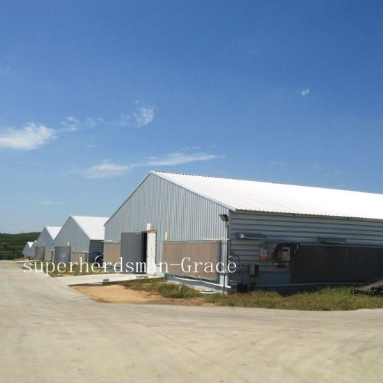 china light steel structure poultry farming shed with production