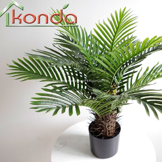 Hot Sale with Plastic Pot Home and Shop Decoration Small Palm Tree Plants pictures & photos