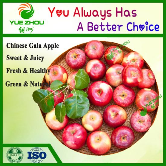 Organic Red Gala Apple From Shandong with Sweety and Fresh