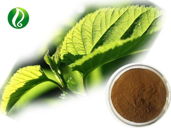 Mulberry Leaf Extract Powder Chlorophyll