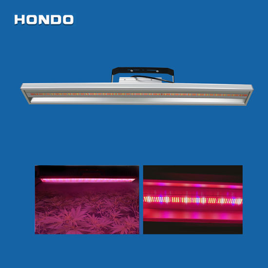 200W Hydroponic System LED Grow Lamp for Greenhouse Hemp Cultivation