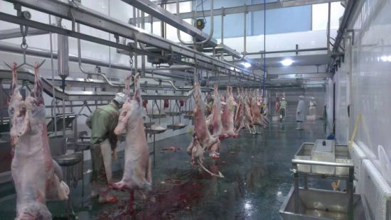 Qingdao Quality Sheep Chain Conveyor Slaughtering Machine Meat Processing Machine