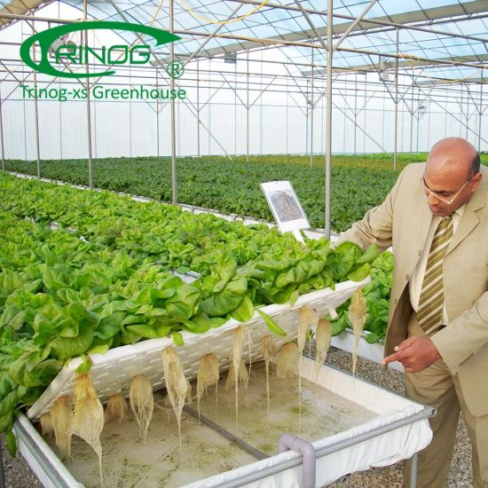 Agricultural DFT hydroponics cultivation system for salad