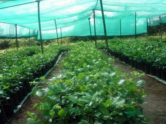 Shade Mesh Cloth Net Garden Greenhouses