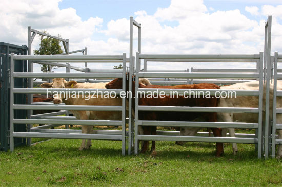 Galvanized Cattle Panel with 40mm*80mm Oval Rail