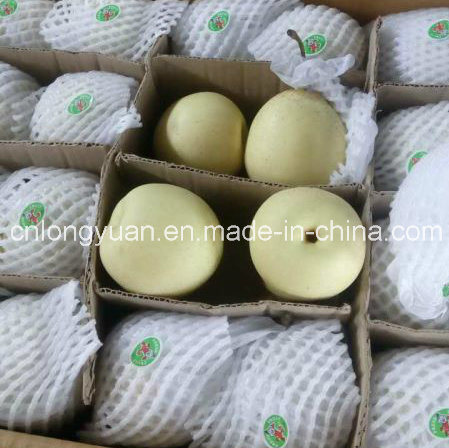 Professional Chinese Supplier of Fresh Ya Pear pictures & photos