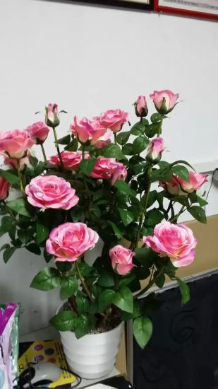 Artificial Flowers of Rose Gu-Jy915221307 pictures & photos