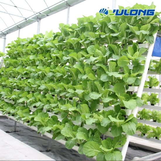 Steel Structure PE film Poly Tunnel Multi Span Lettuce Greenhouses