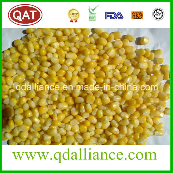 IQF Frozen Super Sweet Corn with Top Quality with Kunlun Bank
