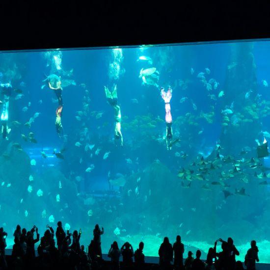 Large Acrylic Aquarium Project