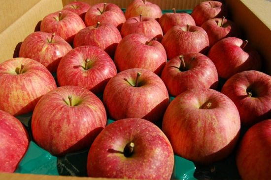 Competitive Price and Good Quality FUJI Apple