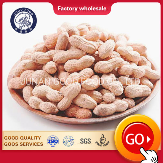 Europe Groundnut with Shell/ Europe Peanut with Shell/Raw Shelled Peanuts pictures & photos