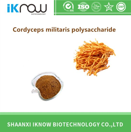Top Quality Natural Cordyceps Militaris Polysaccharide Brown Powder for Sale pictures & photos