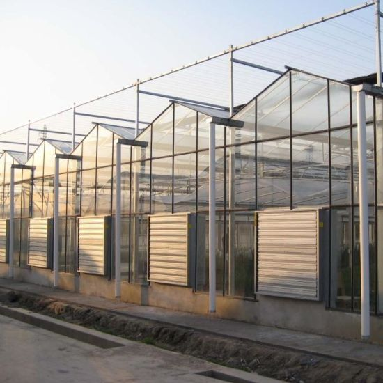 Customized Greenhouse Commercial Glass Greenhouse