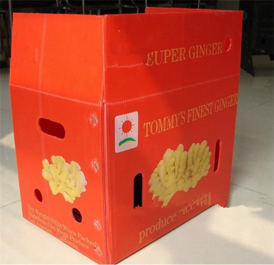 PP Collapsible Corrugated Plastic Food Garde Packing Box Case