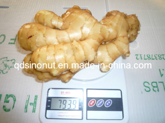 Fresh Ginger EU Quality 250g&up pictures & photos