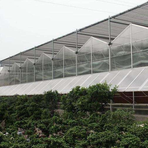 Steel Frame Glass Greenhouse for Vegetable