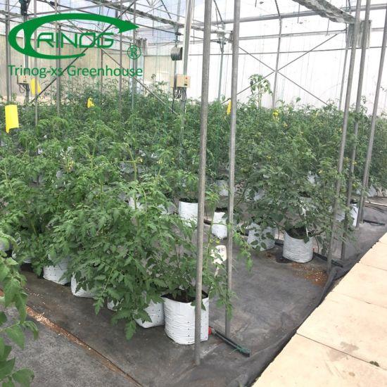 Economical Commercial Flower Greenhouse for farm