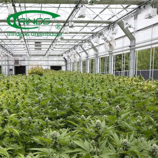 Vertical all blackout CBD greenhouse for sale