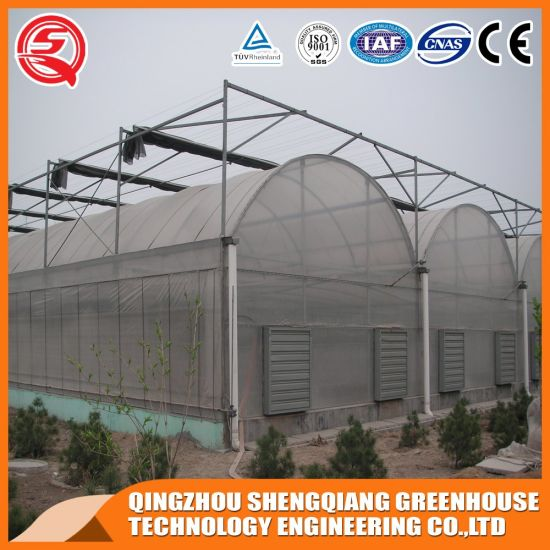 China Agriculture Productive Commercial Plastic Film Greenhouse for Garden