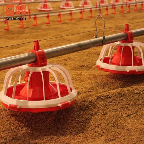 Goldenest Poultry Farm Equipment for Broiler Birds