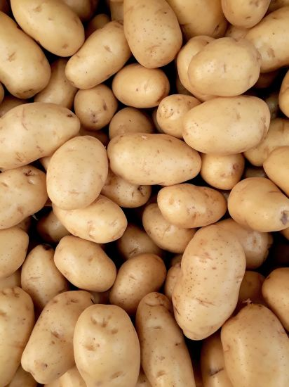 Chinese Fresh Potato Wholesale Supplier pictures & photos
