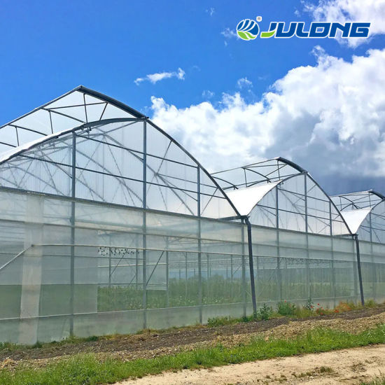 Agricultural/Commercial Plastic Multi-Span Film Greenhouse with Hydroponic System and Automatic Irrigation System
