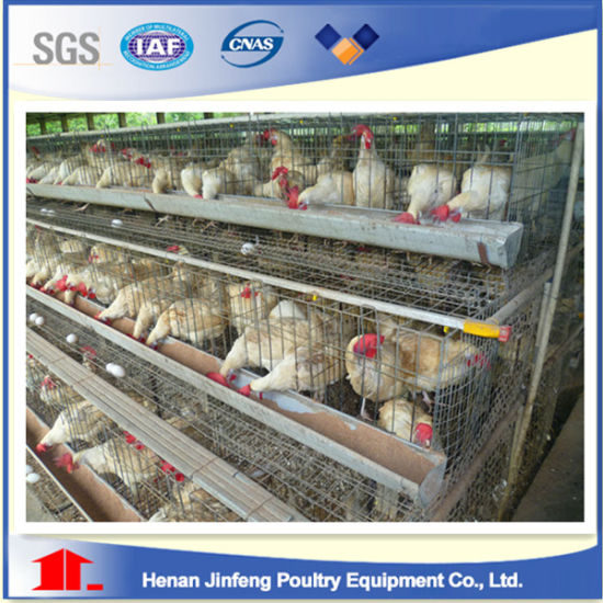 Layer Chicken Cage Made Mesh Wire for Poultry Farm