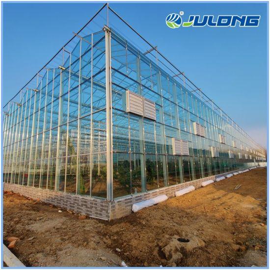 Multi-Span Venlo Glass Greenhouse with Galvanized Steel Frame for Lettuce/Pepper/Tomato/Cucumber