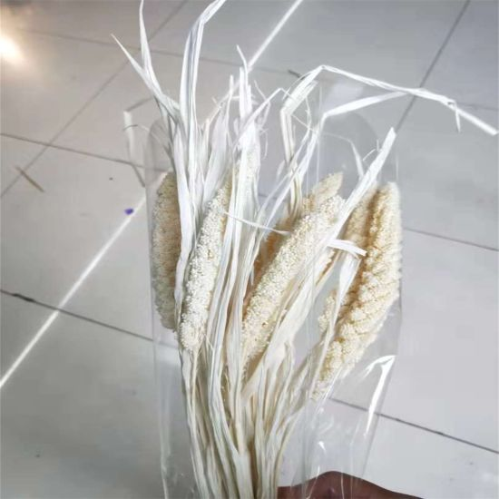High Quality Predserved Dried Flower Millet Panicle pictures & photos