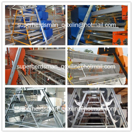 Hot Sale Automatic Chicken Cage for Layer Farm pictures & photos