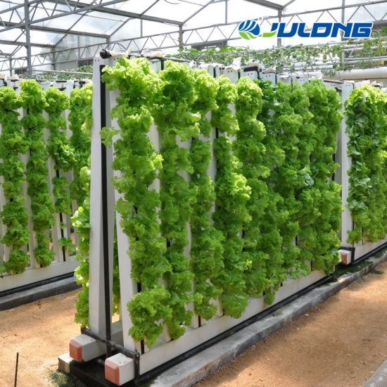 Greenhouse Hydroponics Vertical Growing System for Lettuce Spinach Celery Tomato
