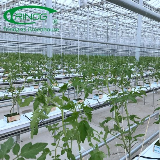 European Style venlo structure Glass Greenhouse for Tomatoes