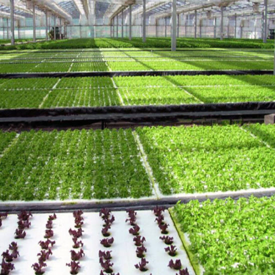 Flat Bed Seedling Bed Hydroponics Vertical Shade Net Plastic Hydroponics System Shading System