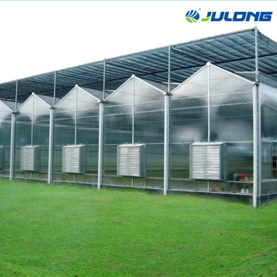 Commercial Agricultural Polycarbonate Multi Span Greenhouse