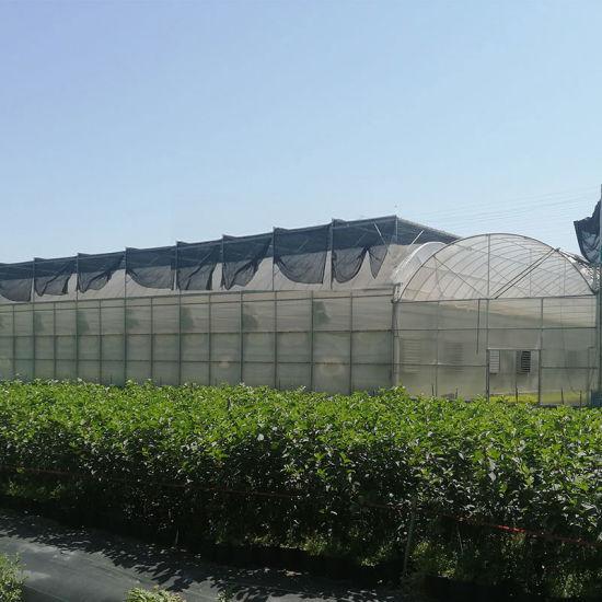 Intelligent Plastic Film Greenhouse for Vegatable