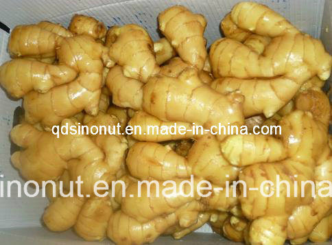 2020 Hot Sales Fresh Ginger Semi Dry or Full Dry pictures & photos