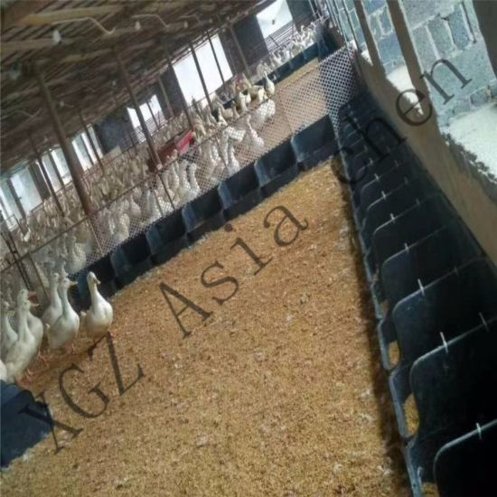 Newly Designed Duck Breeding System pictures & photos