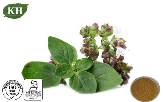 Natural High Quality Oregano Extract 10: 1 pictures & photos