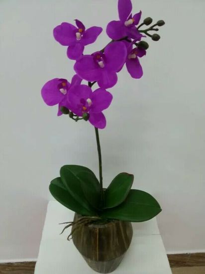 Best Selling Artificial Flowers of Natural Touch Orchid in Pot Wp001 pictures & photos
