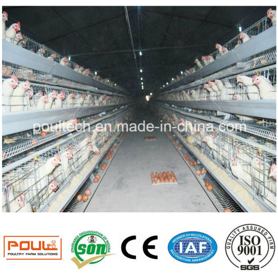 Automatic Battery Chicken Cages Made in China pictures & photos