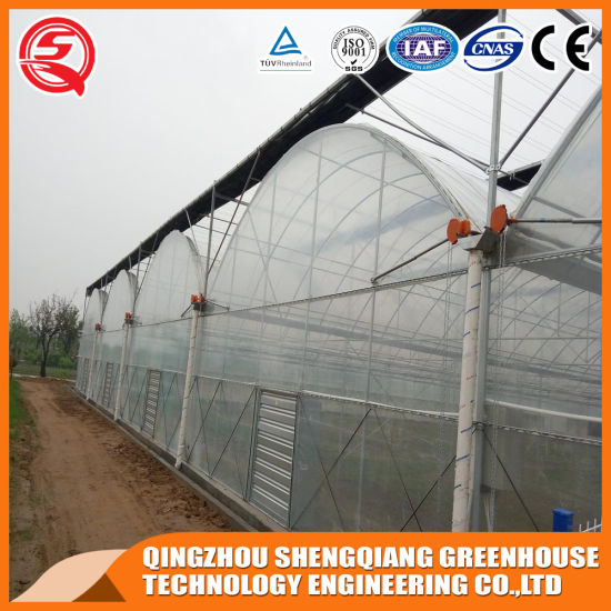 Agriculture Productive 8m Plastic Film Garden Greenhouse Hydroponic for Sale