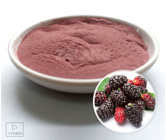 ISO22000 Kosher Certified Manufacturer Mulberry Concentrate Extract