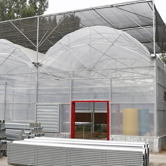 200 Microns Plastic Film Greenhouse for Tomato