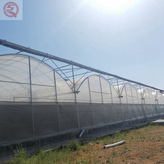Agricultural Multi-Span Plastic Film Hydroponics Growing Cucumber/Tomato/Pepper/Mushroom/Garden Greenhouse for Sale