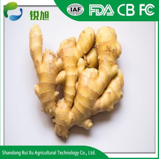 China Ginger Buyers/Fresh Ginger - China Fresh Vegetables, Fresh