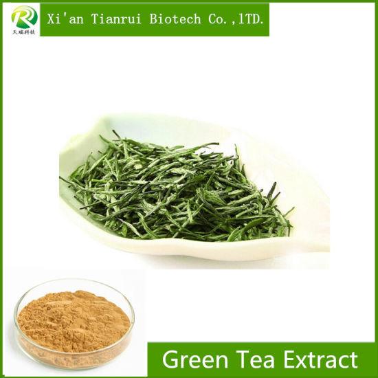 Factory Supply Organic 100% Pure Organic Green Tea Extract